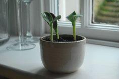 White Ceramic Plant Pot, Wabi Sabi Pot, Small Ceramic Plant Pot , Housewarming Gift by ANNABELTALBOTGALLERY on Etsy