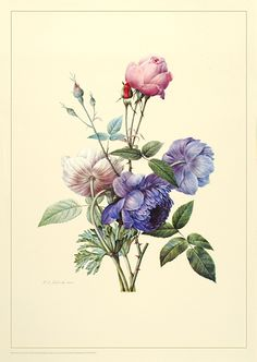 The music also reminds me of the beautiful flower drawings by Redouté. But that doesn't convey the modern/contermporary aspect of the program.