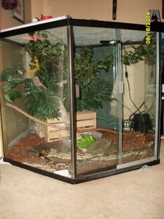 The best scary cage of which snake … – Reptile Cage
