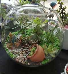 How to Grow a Succulent Terrarium – The garden! garden plants succulents How to Grow a Succulent Terrarium Colorful Succulents, Cacti And Succulents, Planting Succulents, Growing Succulents, Cactus Plants, Crassula Succulent, Succulent Gardening, Succulent Outdoor, Flower Gardening