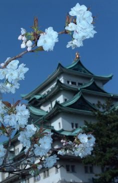 Nagoya Castle, Nagoya, Japan Copyright: Dan Leung