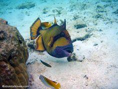 The Colorful Underworld of the Maldives