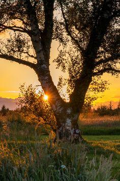 Battlefield Sunset - null