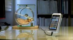 Hamster Smartphone Charger Provides Free Energy