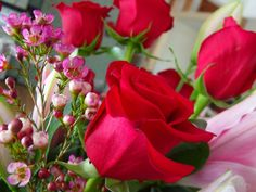 Happy Valentines Day by Stephanie Fay