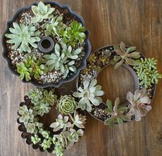 I love succulents because they are easy to care for and can be planted in pretty much anything, even baking supplies.
