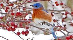 Ptáci v zimě na vaší zahradě