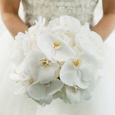 white wedding bouquet with orchids White Orchid Bouquet, White Wedding Bouquets, Bride Bouquets, White Orchids, Bouquet Wedding, White Roses, Gardenia Bouquet, Wedding Dresses, White Flowers