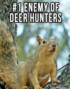 squirrels can be so annoying /  Unique items for unique people/ outdoor enthusiasts/  www.alwaysanadventure.com
