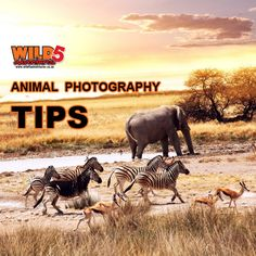Animal Photography: Shoot wider and closer Animal Photography, Photography Tips, Flora And Fauna, Closer, Wildlife, Elephant, Adventure, Quizzes, Art