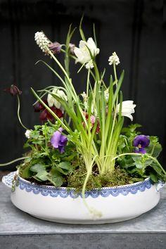 Spring time is getting closer. My friend Martin Reinickefrom Blomsterskuret in Copenhagen has made a little spring time flower arrangement ...