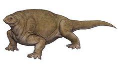Resultado de imagen para cotylorhynchus
