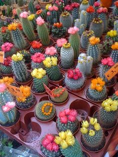 Inspire Bohemia: The Amsterdam Flower Market: Part II: Succulents and Cacti