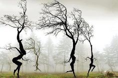 If trees could dance!