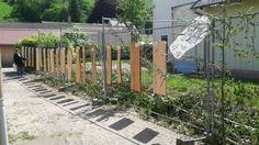 Différentes essences de bois→ Forêt dans La Ville → Sainte-Marie-Aux-Mînes