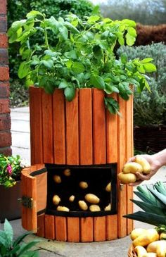 Grow your own.Think a veg patch is beyond the scope of your small garden? With container gardening you could even collect a regular potato crop. This wooden potato barrel is suitable for up to four plants, and the swing door at the front means you can har Outdoor Projects, Garden Projects, Diy Projects, Container Gardening, Gardening Tips, Potato Barrel, Potatoes In A Barrel, Dream Garden, Lawn And Garden