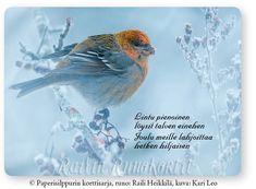 Taviokuurna, Railin Runokortti Bird, Animals, Animales, Animaux, Birds, Animal, Animais