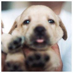 Follow, like and post feedback if you find this pet is cute:) #cats #catsagram #catstagram #instagood #kitten #kitty #kittens #pets #animal  #petstagram #petsagram  #catsofinstagram #ilovemycat #instagramcats #catoftheday #lovecats #lovekittens #catlover #instacat  #dog #puppy #pup #dogsofinstagram #ilovemydog