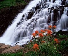 Reconnect with nature. Photo of wild flowers nestled by the Falls in Yankee Boy Basin by Mike Boyd - Colorado