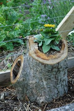 hollowed tree stump planters