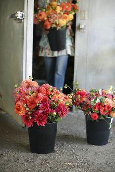 Floret Flower Farm by Erin Benzakein / Floret Flower Farm, via Flickr
