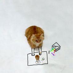 http://www.sympatico.ca/actualites/insolite/meilleurs-doodle-cat-challenge-1.1617934