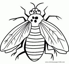Fly Is A Bug Coloring Sheet Free Printable
