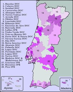 Wine growing areas in Portugal.  The destruction of growing areas by mildew and phylloxera destabilized the production of wine. Previously considered to be reserved for household consumption, production of vinho verde began to be organized early in the twentieth century.
