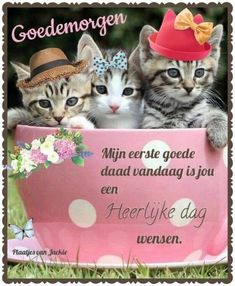 Cute Good Morning Quotes, Gallery, Cats, Animals, Petra, Tomy, Good Morning, Gatos, Animales