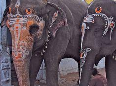 Beautiful painted Indian elephants