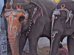 Painted Indian elephants.