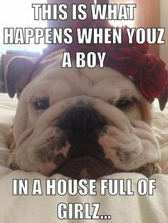 #Bionic Humor. Our founder owns a bull dog just like this one named Rocko and boy does he LOVE our toys!  www.bionicplay.com