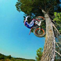 Toni bou Trials up a tree on his Montesa Honda HRC Repsol 4RT motorcycle. Spanish World Champion