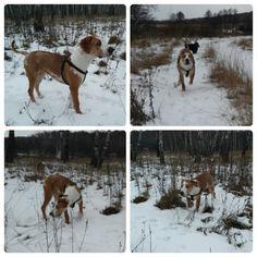 Winter Jacob