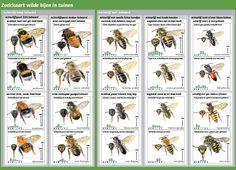Bijentelweekend 12 en 13 mei 2012. Doe mee! | Bijensterfte, oorzaken en gevolgen