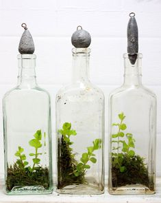 Simple terrariums. I think I can probably make some like these...