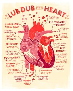 love anatomy — Rachel Ignotofsky Design