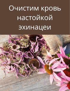 The Creator, Herbs, Health, Plants, Medicine, Health Care, Herb, Plant, Planets