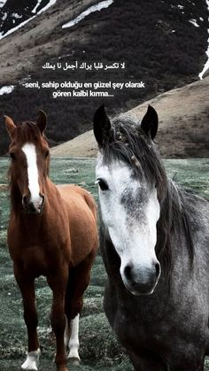 Closer Quotes Movie, King Horse, Allah Islam, Galaxy Wallpaper, Cool Words, Karma, Quotations, Horses, Thoughts