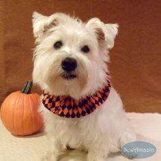Halloween Argyle Black and Orange Pet Scrunchie Neck Ruffle | SewAmazin @sewamazin  #bmecountdown