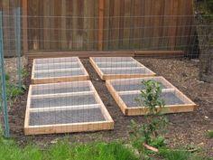 Plant Grass In The Chicken Yard