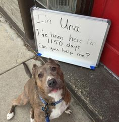 Una needs a special home and forever human to understand the abuse she suffered through and overcame. Please, if you have the patience and love, consider adopting her.