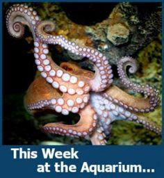 The weekly highlight at the NC Aquarium