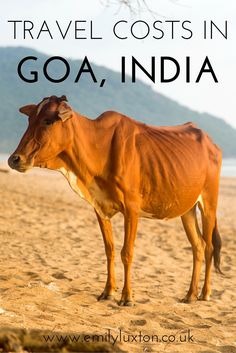 Travel Costs in Goa. I recorded all my expenses in Goa to help you plan a travel budget for India.