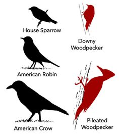 Nature Study Resource - Learning to identify birds by size and shape.  Cornell Lab of Ornithology