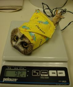 This is how owls are weighed. << oh. Oh my.