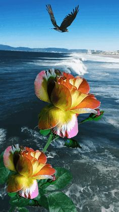 Beautiful Flowers Wallpapers, Beautiful Flowers Garden, Beautiful Nature Wallpaper, Beautiful Photos Of Nature, Beautiful Gif, Beautiful Roses, Rose Flower Wallpaper, Flowers Gif, Vogel Gif