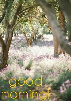 *** 151108 *** Good Morning Card for Media with Trees and Flowers G Morning, Good Morning Cards, Good Morning Flowers, Good Morning Good Night, Good Morning Wishes, Beautiful Morning, Good Morning Quotes, Wednesday Morning, Night Quotes