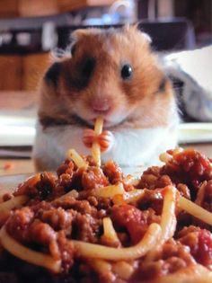 I has a spaghetti!
