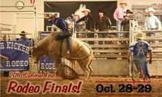 2016 Fall Rodeo Finals banner1